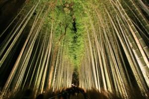嵐山竹林の道(ライトアップ)
